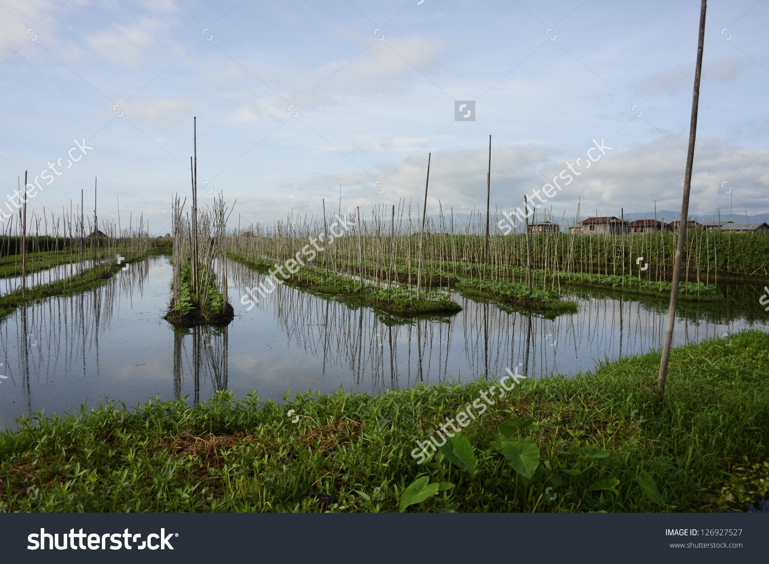 Floating Farm On Inle Lake Nyangshwe Stock Photo 126927527.