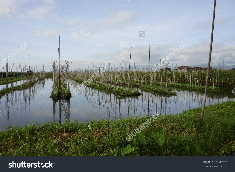 Floating Farm On Inle Lake Nyangshwe Stock Photo 126927527.