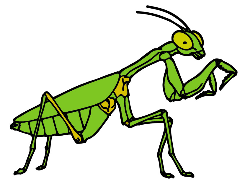 Grasshopper insect clipart.
