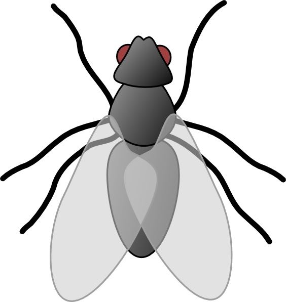 Fly Bug Insect clip art Free vector in Open office drawing.
