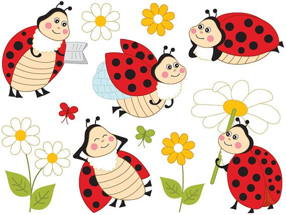 1000+ ideas about Ladybird Insect on Pinterest.