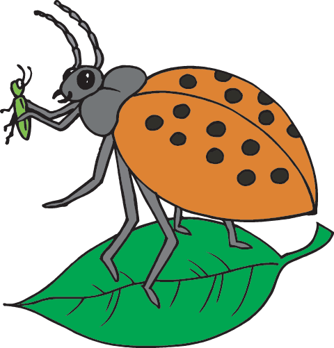 Insects: Facts (Science Trek: Idaho Public Television).