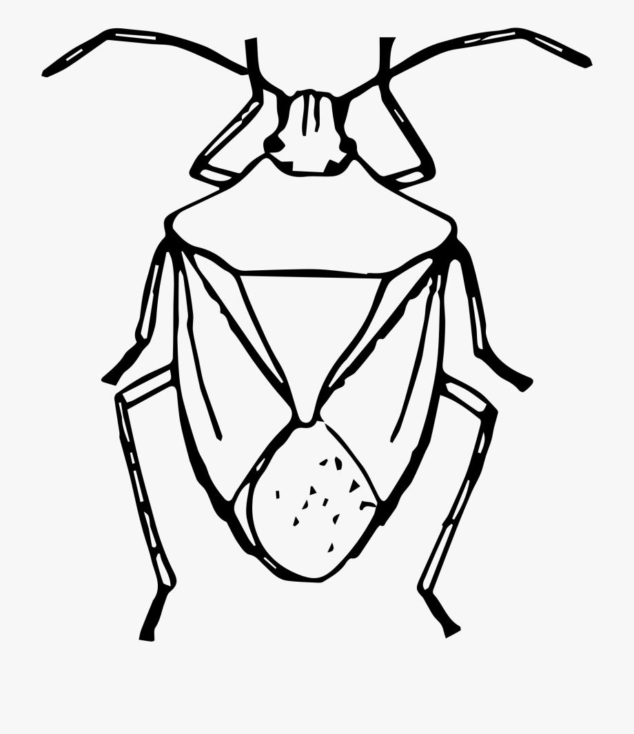 Insect Clipart Easy.