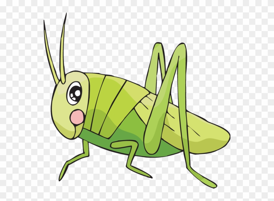 Easy To Draw Cricket Clipart Drawing Insect Clip Art.