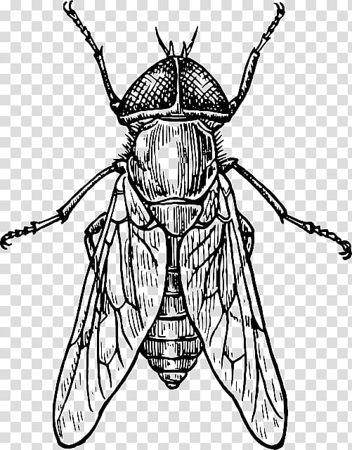 Beetle How to draw insects Drawing Insect wing, insect.
