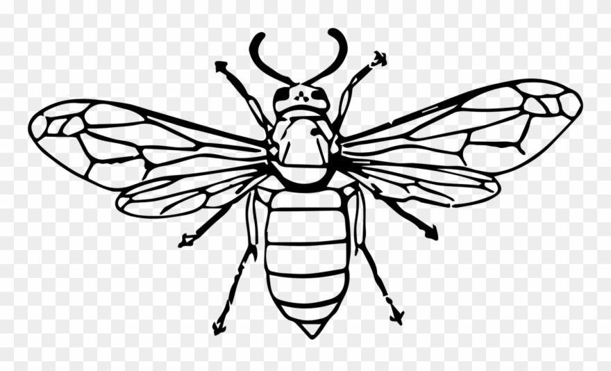 Hornet Bee Insect Wasp Drawing.