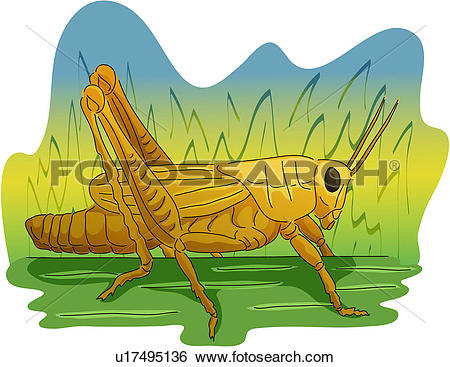 Clip Art of arthropod, insect, grass, locust, grasshopper.