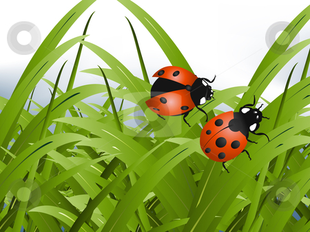 Bright red Lady Bug stock vector.