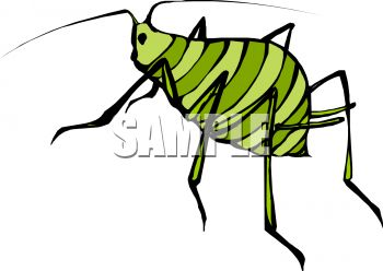 Tiny Striped Green Insect With Fat Body and Little Head.