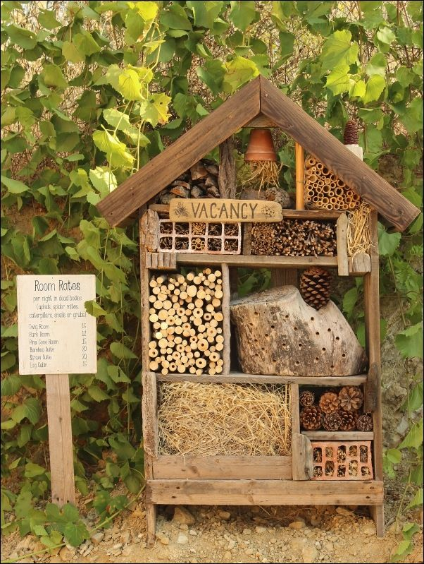 17 Best ideas about Are Bees Insects on Pinterest.