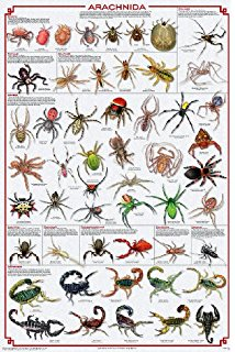 Amazon.com: (24x36) Insect Identification Educational Science.