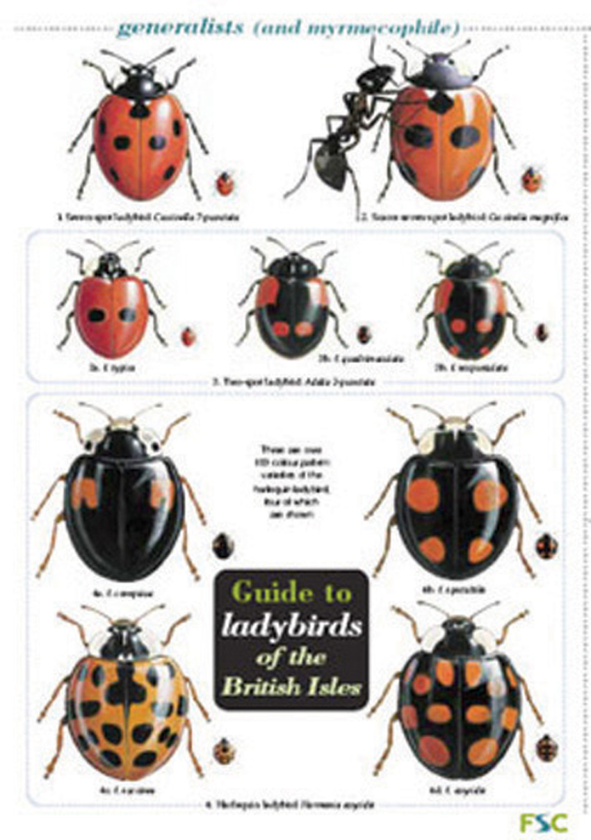 Insect identification charts.