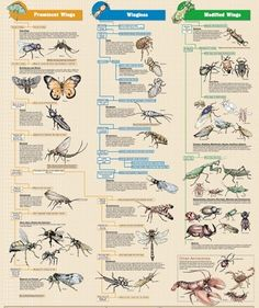 Insect identification, Insect activities and Insects on Pinterest.