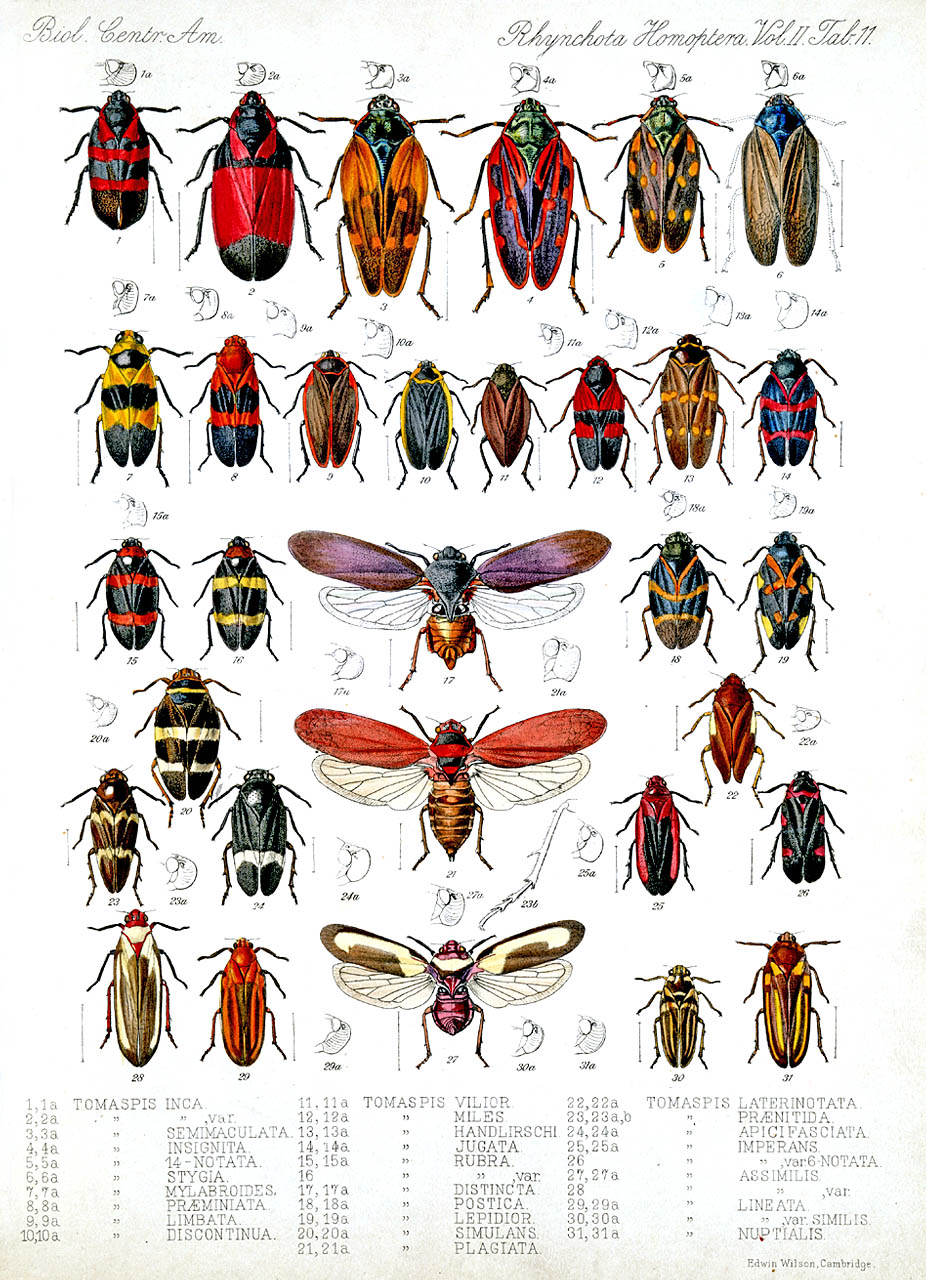 Insect identification clipart #7