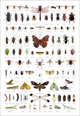 1000+ ideas about Insect Identification on Pinterest.