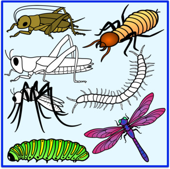 Insects Clipart.