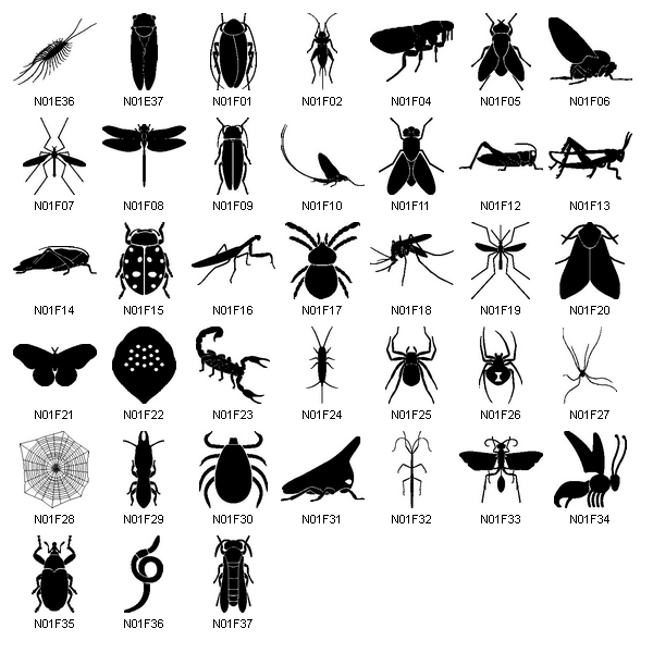 Clipart pictures of insects.