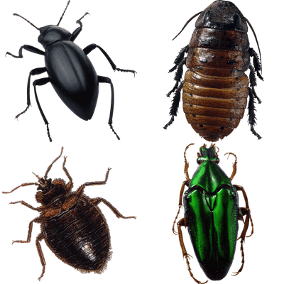 Insects transparent PNG images.