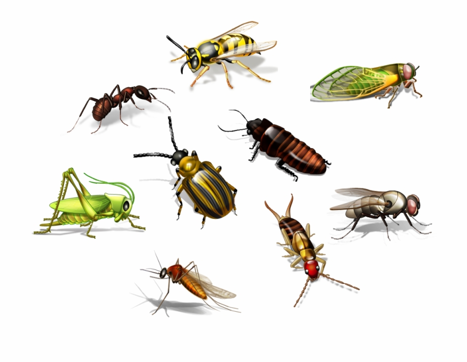 Insect Png Transparent Picture.