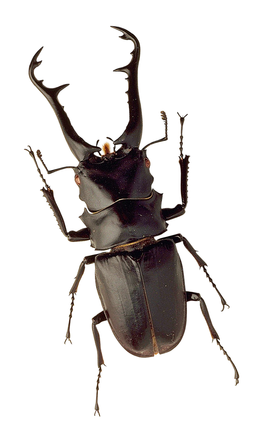 Insect PNG Transparent Images.