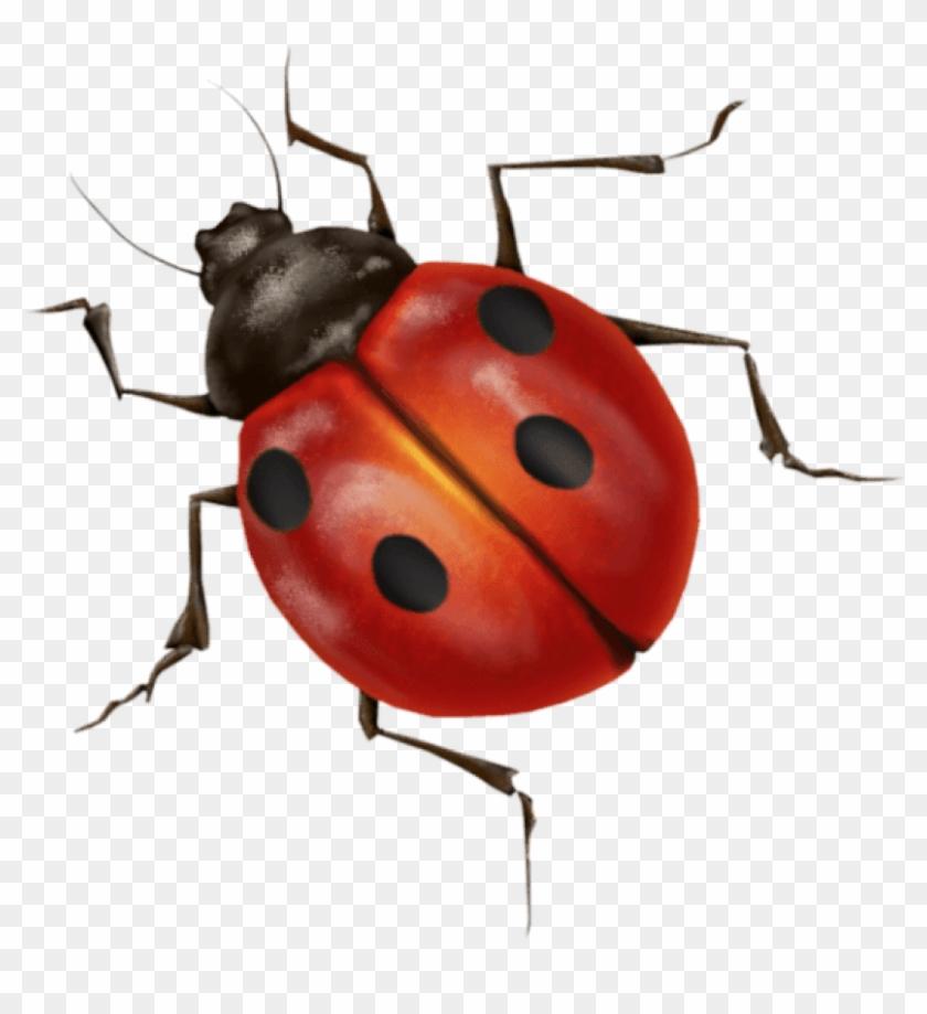 Download Ladybug Png Images Background.