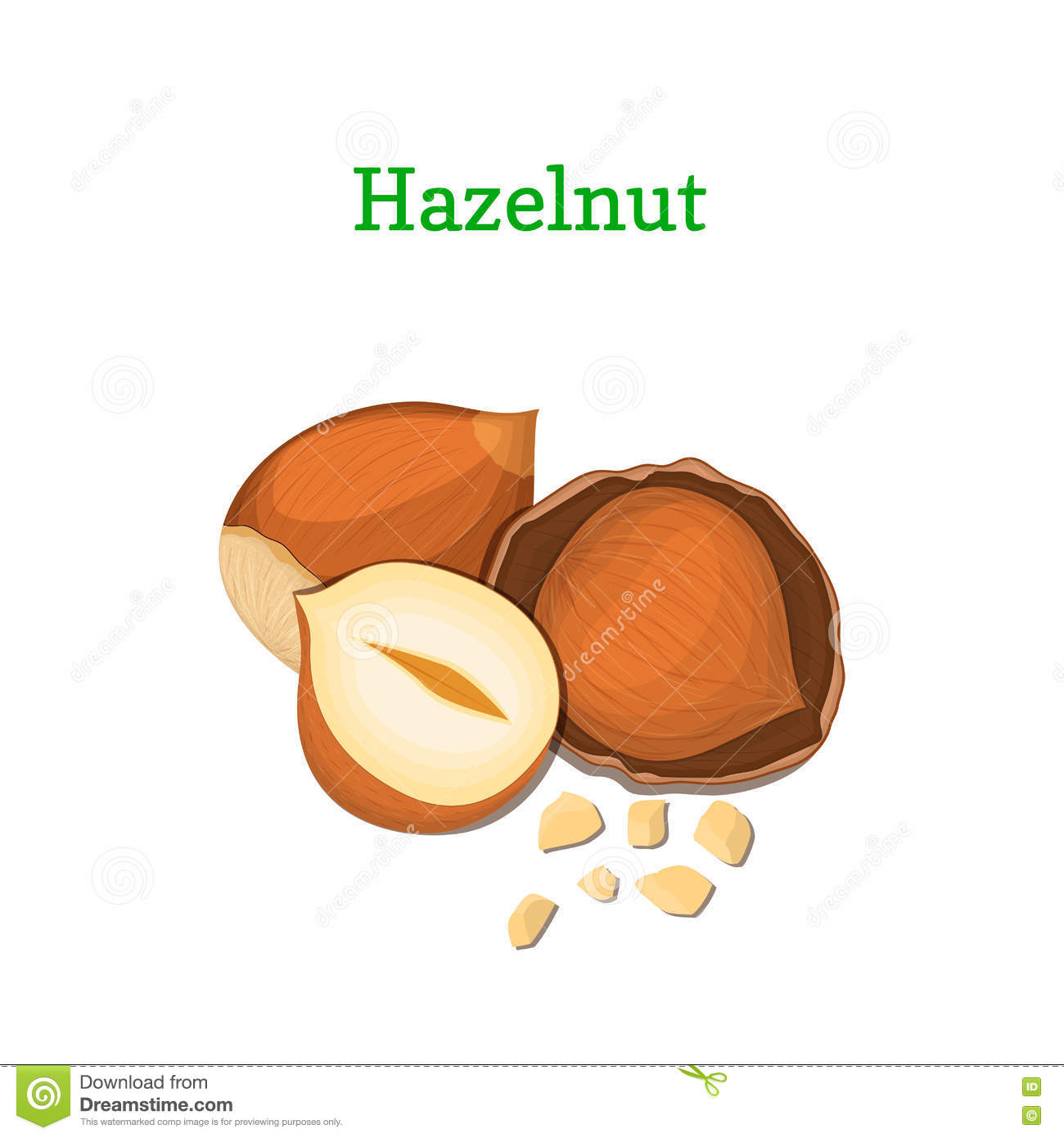 Hazelnuts Vector Illustration Of A Handful Walnut Peeled Nuts And.