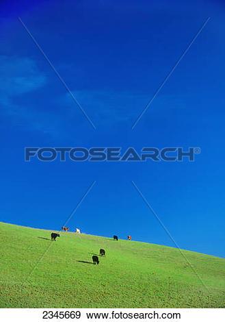 Stock Photograph of Livestock.