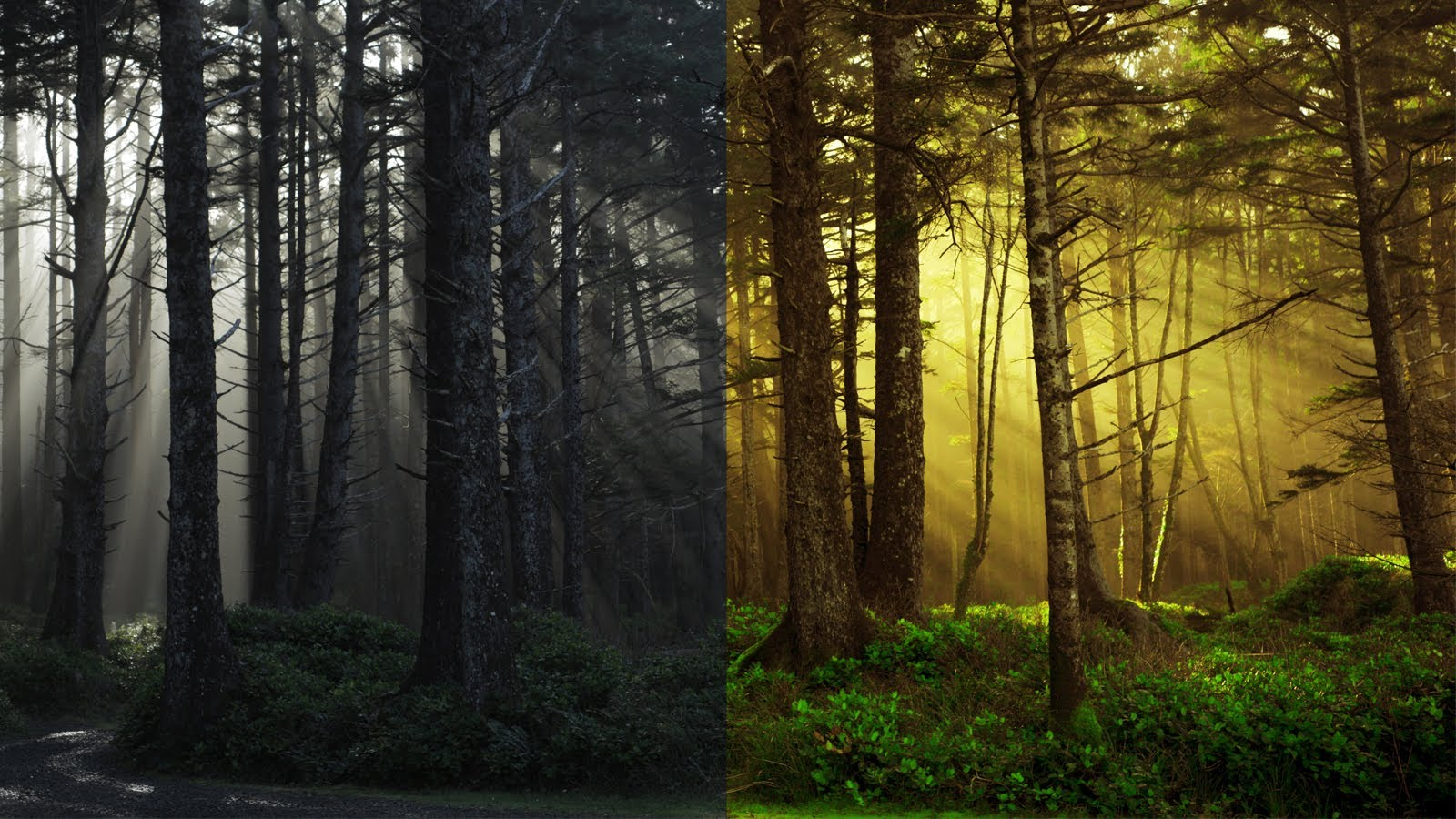 CS5 Photoshop Photo Editing: How to make intense color warm hued.