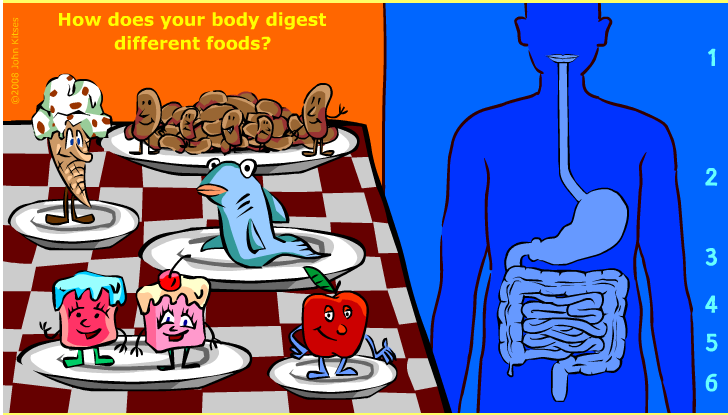 Interactive Human: Digestion Interactive Game for Kids.