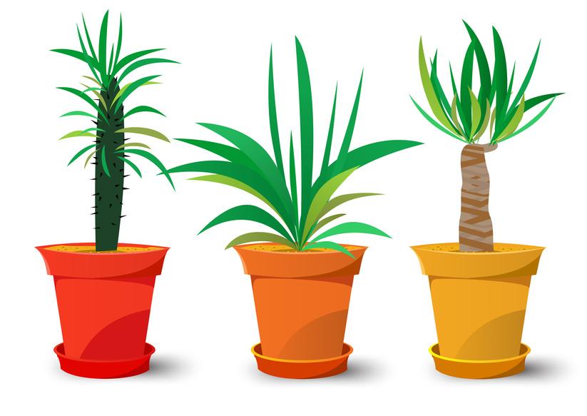 popular indoor plants Archives.