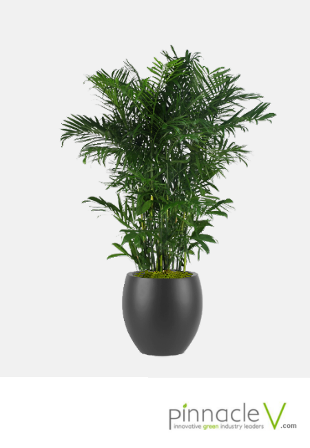 Interior Plants.