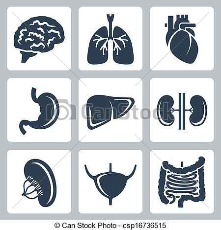 Internal Stock Illustrations. 16,503 Internal clip art images and.