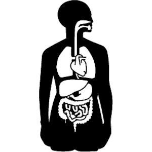Internal organs clipart.