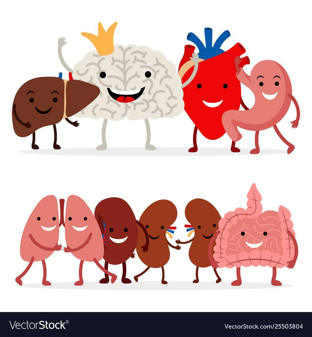 Cute human internal organs isolated on.