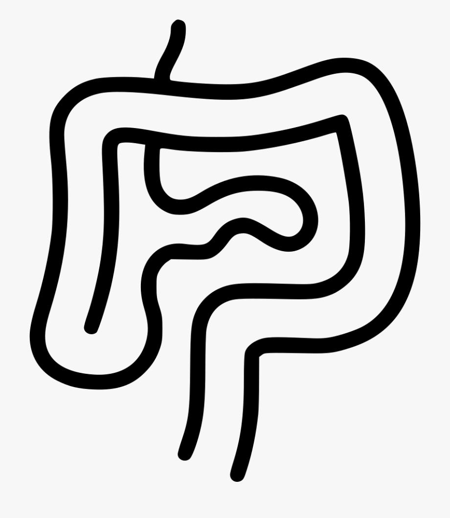 Intestines Digestion Gastroenterology Internal Organs.
