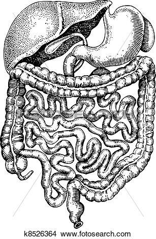 Clipart of Internals of man k8526364.