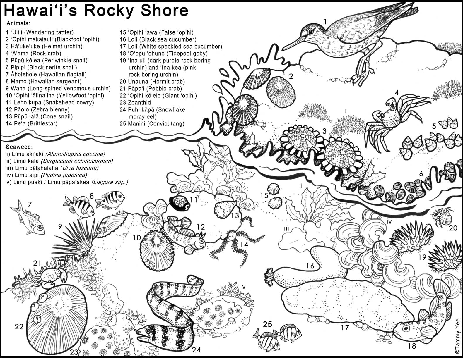 Similiar Ocean Zones With Creatures Coloring Pages Keywords.