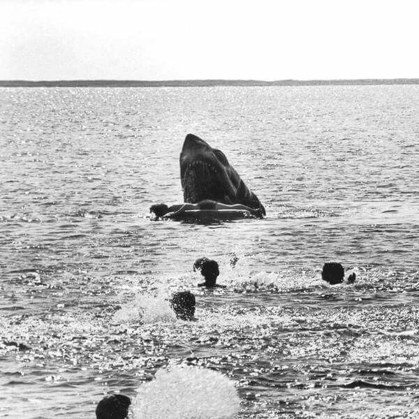 886 Best images about Jaws on Pinterest.