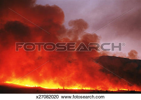 Stock Photography of USA, California, Inyo County, Bishop, forest.