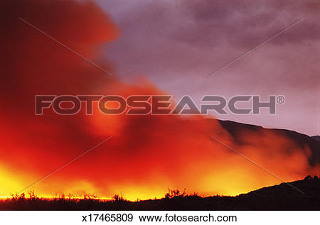 Stock Photograph of USA, California, Inyo County, Bishop, forest.