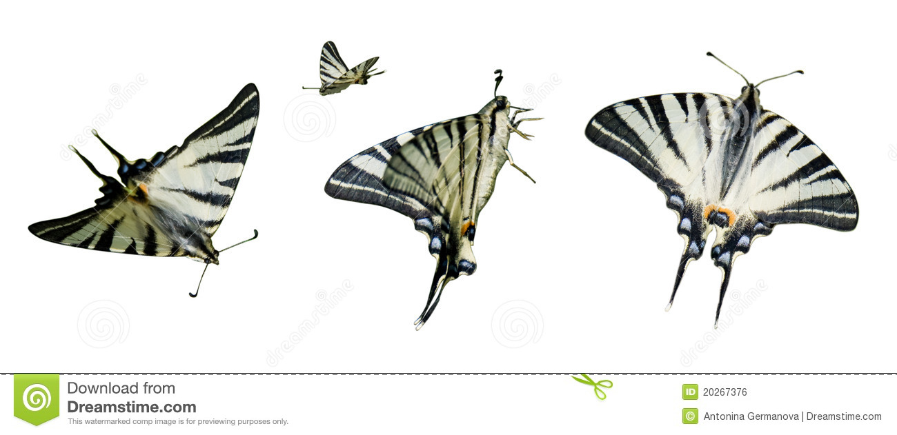 Clipart Butterfly Royalty Free Stock Image.