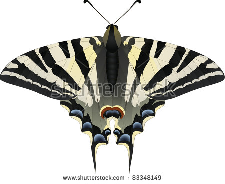 Scarce Swallowtail Stock Vectors & Vector Clip Art.