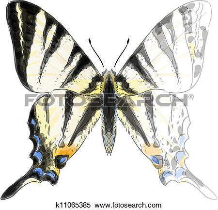 Clipart of Butterfly Iphiclides Podalirium. Unfinished Watercolor.