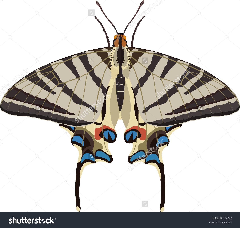 Iphiclides Podalirius Stock Photo 794277 : Shutterstock.