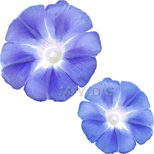 Morning Glory, Ipomoea Nil clipart / Free clip art.