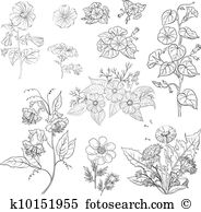 Ipomoea Clipart and Illustration. 73 ipomoea clip art vector EPS.