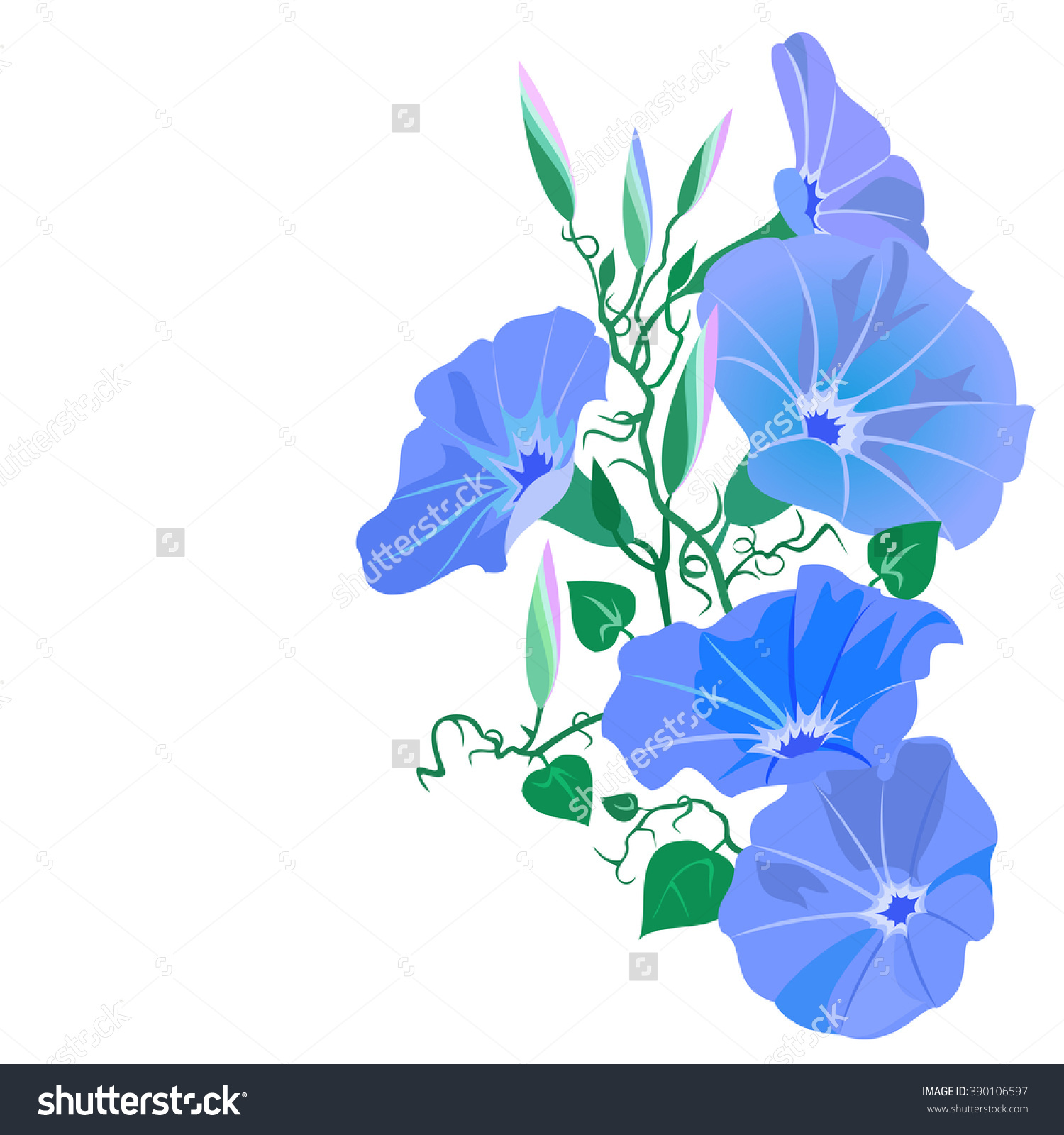 Morning Glory Vine Ipomoea Tricolor Hand Stock Vector 390106597.