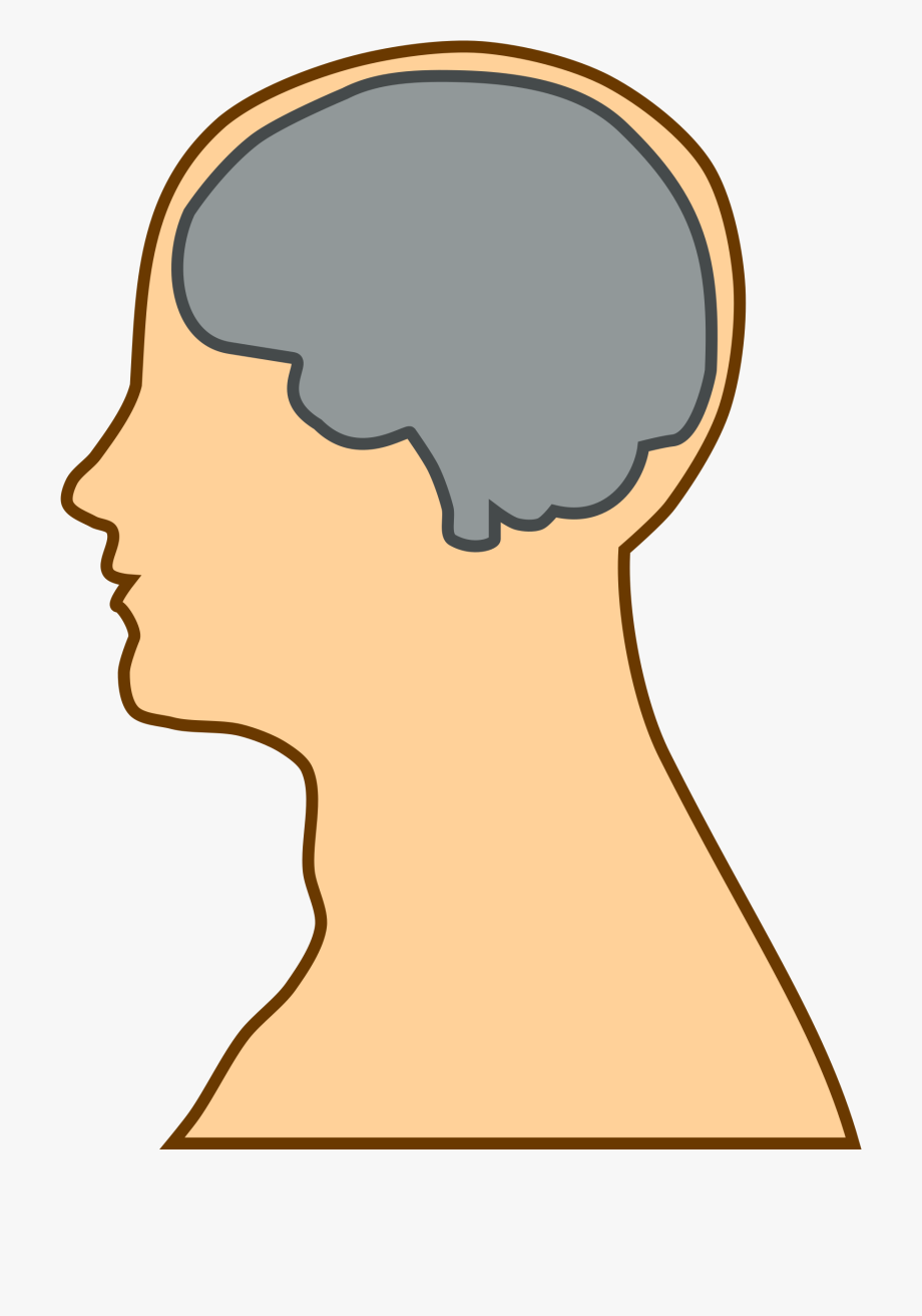 Clipart Of Brain, Neck And Minds.