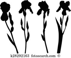 Iridaceae Clipart and Illustration. 23 iridaceae clip art vector.