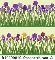 Iridaceae Clip Art and Stock Illustrations. 13 iridaceae EPS.